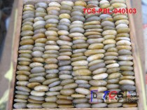 TCS-PBL-040103 Yellow Pebble Standing on Mesh